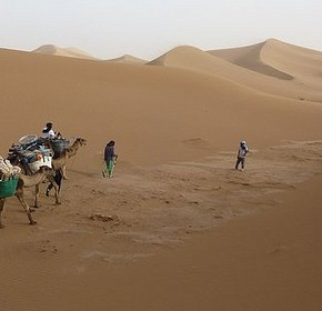 Do you have a New Year's Eve plan? Come to the Sahara Desert